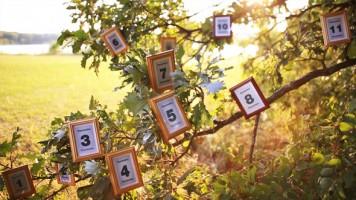 自分で撮った写真が木にかけられる!?不思議な合成映像